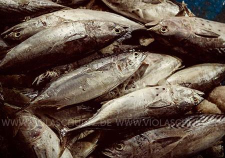 Vietnam-Reisefotografin-Reportage-Fischmarkt-Hoi-An-photo-report-market-Bilder