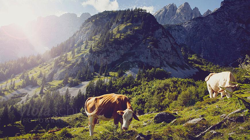 Bilder-Wandern-Wilder-Kaiser-Fotografie-Lifestyle-Berge-Kampagne-01